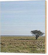 Alone Tree At A Coastal Grassland Wood Print