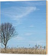 Alone Tree In The Reeds Wood Print