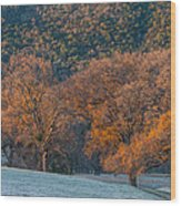 Along Miwok Trail In Winter Wood Print