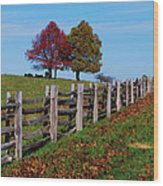 Along The Fence Wood Print