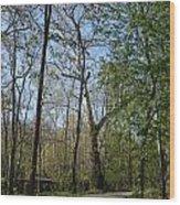 Along The Path Wood Print