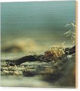 Along The Sea-coast Wood Print