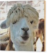 Alpaca Hair Do Wood Print