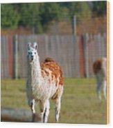 Alpaca Wood Print by Rhonda Humphreys