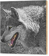 Alpha Male Wolf - You Look Tasty 2 Wood Print