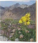 Alpine Flowers Wood Print