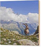 Alpine Ibex Wood Print