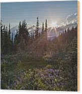 Alpine Meadow Sunrays Wood Print
