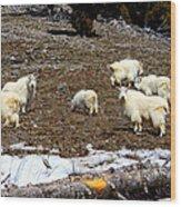 Alpine Mountain Goats Wood Print