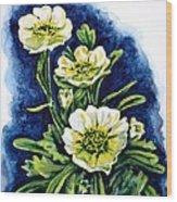 Alpine Ranunculus Wood Print by Zaira Dzhaubaeva