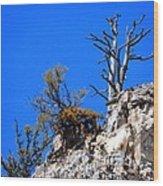 Alpine Wyoming Wood Print