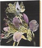 Alstroemeria Wood Print