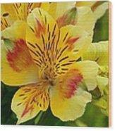 Alstroemerias Flower 1 Wood Print
