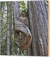 Altered Tree Trunk Growth Wood Print
