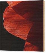 Amaryllis Abstract Wood Print
