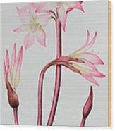 Amaryllis Belladonna Wood Print