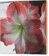 Amaryllis In Bloom Wood Print