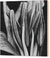Amaryllis In Bw Wood Print