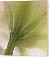 Amaryllis In Sun Wood Print