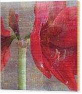 Amaryllis In The Rough Wood Print