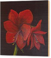 Amaryllis On Black Wood Print