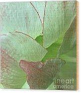 Amaryllis Petals Wood Print