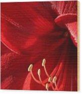 Amaryllis6782 Wood Print