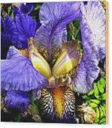 Amazing Iris Wood Print