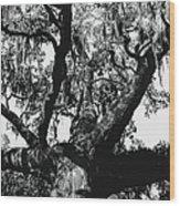 Amazing Oak Tree Wood Print
