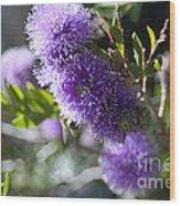 Amazing Purple Melaleuca  Wood Print