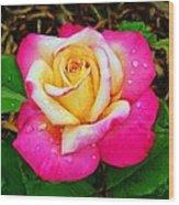 Amazing Red Yellow Rose Wood Print