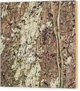 Amazon Ant Wood Print
