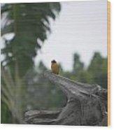 Amazon Bird 1 Wood Print