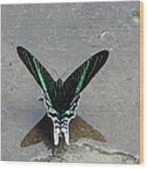 Amazon Butterfly 3 Wood Print