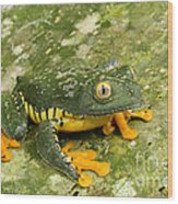 Amazon Leaf Frog Wood Print
