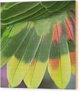 Amazon Parrots Feathers Abstract Wood Print