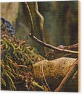 Amazon Tree Boa Wood Print