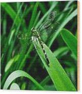 Atchafalaya Dragonfly Wood Print