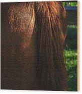 Amber Horse Tail Wood Print