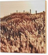 Amber Waves Of Grain Wood Print