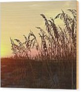 Amber Waves Of Oats Wood Print