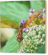 Amber-wing Dragonfly 2 Wood Print