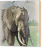 Amboseli Morning   Wood Print