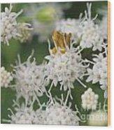 Ambush Bug Wood Print