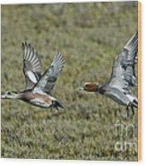American & Eurasian Wigeons Wood Print