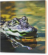 American Alligator 1 Wood Print