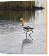 American Avocet Wood Print by Al Powell Photography USA