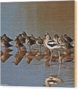 American Avocet And Sleeping Dowitchers Wood Print