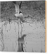 American Avocet Reflection Wood Print