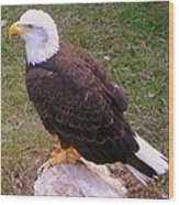 American Bald Eagle 1 Wood Print